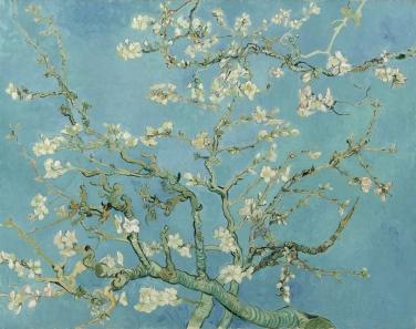 Branches d'amandier en fleur, 1890, Amsterdam